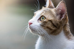 Kot patrzeje nad wierzchołkiem Fotografia Royalty Free