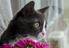 Kot patrzeje okno Obraz Stock