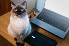 Kot patrzeje prosto przy ja Fotografia Stock
