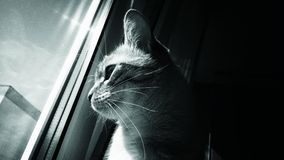 Kot patrzeje przez okno Obrazy Royalty Free