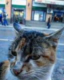 Kot perspektywa zdjęcie stock