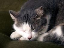 kot śpi Zdjęcie Royalty Free