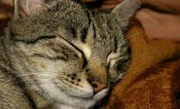 kot śpi Obraz Stock