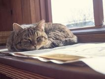 Kot śpi na okno obrazy stock
