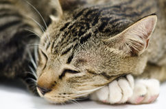 Kot śpi o Zdjęcie Royalty Free