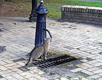 Kot pije od wodnej kolumny Zdjęcia Royalty Free