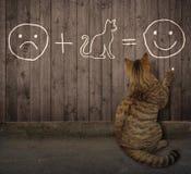 Kot pisze równaniu na ogrodzeniu zdjęcie royalty free