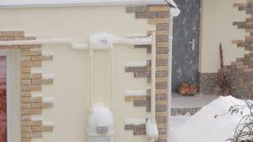 Kot Pod śniegiem zdjęcie wideo