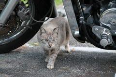 Kot pod motocyklem Fotografia Stock