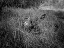 Kot, pole, trawa obrazy stock