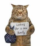 Kot potrzebuje nowej rodziny zdjęcie stock