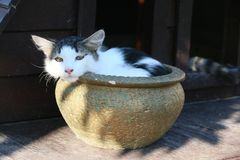 Kot pozwala iść garnek ilustracja wektor