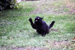 Kot próbuje łapać powietrze obraz stock