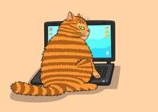 Kot pracy na laptopie Fotografia Royalty Free
