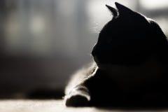 kot profilowy s Obraz Stock