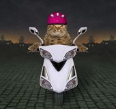 Kot przejażdżka biała hulajnoga na autostradzie fotografia stock