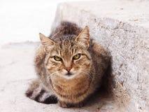 Kot przy kamiennym schodkiem (1) obrazy stock