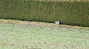 Kot przy krawędzią gazon zdjęcia royalty free