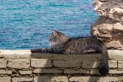 Kot przy morzem Zdjęcia Stock