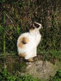 Kot przy ogrodzeniem Obraz Royalty Free