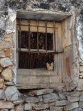 Kot przy okno Zdjęcia Royalty Free