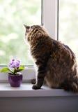 Kot przy okno Obraz Royalty Free
