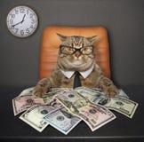 Kot przy stołem z dolarami 2 fotografia stock