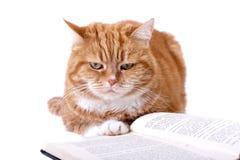 kot przygląda się pomarańczową czerwień Obraz Royalty Free