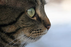kot przygląda się s Fotografia Stock