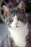 kot przygląda się s Zdjęcie Royalty Free