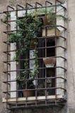 Kot przyglądający przez zakazującego okno out Zdjęcie Royalty Free