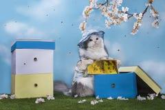 Kot pszczelarka wydobuje miód fotografia royalty free