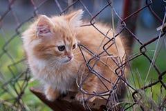 Kot - pussycat w ogródzie obrazy stock