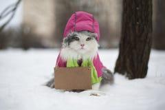 Kot pyta dla pomocy Obrazy Stock