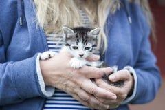 Kot ręki Fotografia Royalty Free