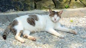 Kot relaksuje na drodze Fotografia Stock