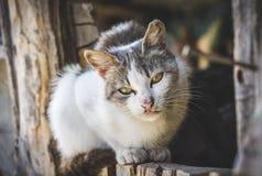 Kot relaksuje na wypuscie Zdjęcia Royalty Free