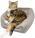 Kot Relaksuje strajki poza odizolowywająca fotografia royalty free