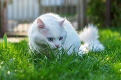 Kot relaksuje w trawie Fotografia Royalty Free