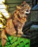 Kot robi śmiesznej twarzy obraz royalty free