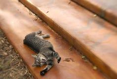 Kot rozciągliwość Obraz Royalty Free