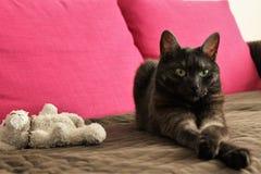 kot słodkie gray zdjęcie royalty free