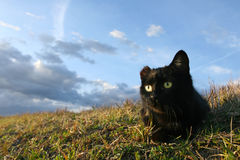 kot słyszący jeden Zdjęcie Royalty Free