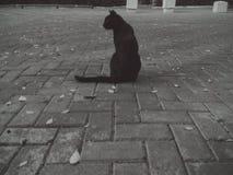 kot samotny Zdjęcia Royalty Free