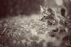 kot samotny Fotografia Stock