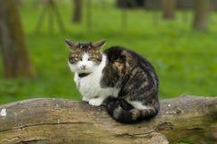kot się gapić Zdjęcie Royalty Free