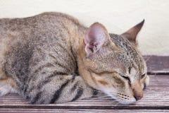 kot się odprężyć Fotografia Royalty Free