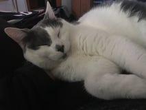kot się odprężyć zdjęcia royalty free