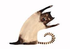 kot siamese ilustracji