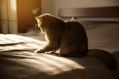 Kot siedzi na łóżku w promieniach słońce zdjęcia stock